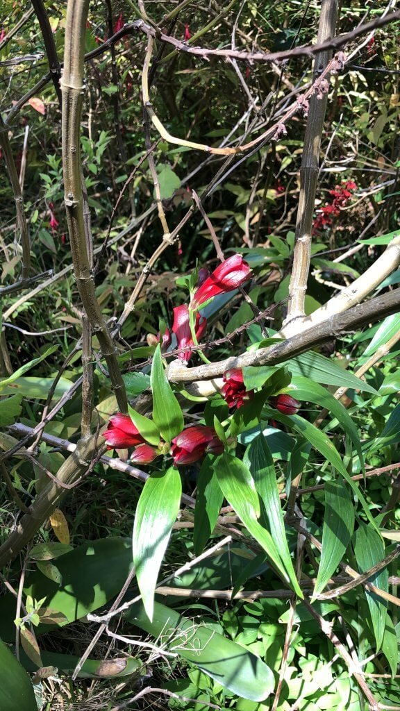 Greenery with red blossoms